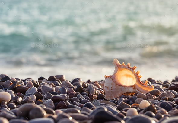 Sea rocky shore with a beautiful seashell - Stock Photo - Images