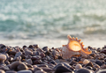 Sea rocky shore with a beautiful seashell - PhotoDune Item for Sale