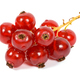 Bunch of red currants on white background - PhotoDune Item for Sale