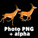 Herd of Antelopes or Gazelles Runs - VideoHive Item for Sale