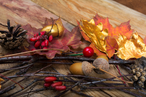 Thanksgiving background with acorns, golden and colorful maple l - Stock Photo - Images