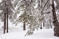Winter forest with snow on trees - PhotoDune Item for Sale
