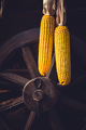 Hanging corn on a vintage cart wheel. Still life