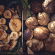 Collection of edible mushrooms in the market - PhotoDune Item for Sale
