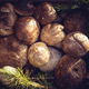 Edible mushrooms for selling in a market - PhotoDune Item for Sale
