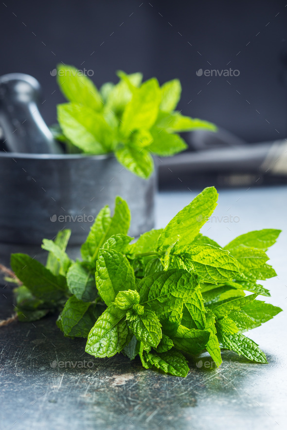 Branch mint leaves. - Stock Photo - Images