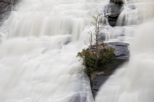 Rock with tree clinging tenaciously on a massive waterfall - Stock Photo - Images