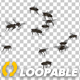 Fly Swarm - Flying Around - VideoHive Item for Sale