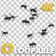 Fly Swarm - Flying Around - 4K - VideoHive Item for Sale