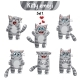 Tabby Cat Characters Set 1 - GraphicRiver Item for Sale