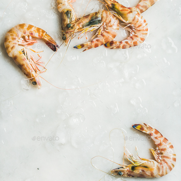 Uncooked tiger prawns on chipped ice, square crop - Stock Photo - Images