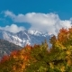 of the Autumn Forest and Colored Trees in the Mountain - VideoHive Item for Sale
