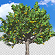Apple Tree - VideoHive Item for Sale