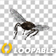 Swarm Flies - VideoHive Item for Sale