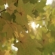 Rays of the Sun Through the Autumn Foliage - VideoHive Item for Sale
