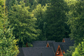 Wooden log cabins roofs in forest - PhotoDune Item for Sale