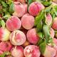 Fresh peaches an a local market - PhotoDune Item for Sale