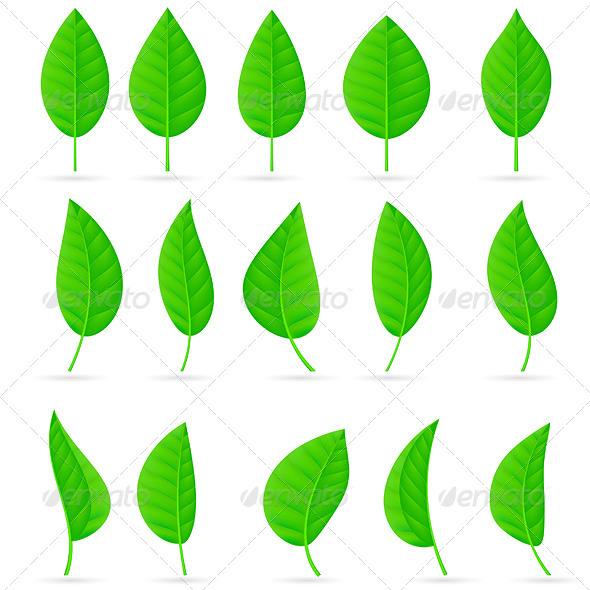 Various types and shapes of green leaves - Objects Vectors