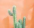 Cactus Fashion Set. Art gallery Design. Minimal - PhotoDune Item for Sale