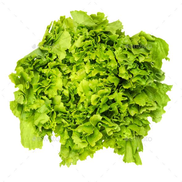 Escarole endive lettuce head from above over white Stock ...