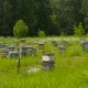 Bee Apiary at the Edge of the Forest. Bee Houses. - VideoHive Item for Sale