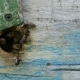 Bees Fly Out of the Hive To Collect Honey - VideoHive Item for Sale