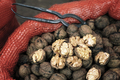 Close up picture of walnuts in a bag on a local market. - PhotoDune Item for Sale