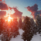 Sunny Winter Forest - VideoHive Item for Sale
