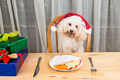 Concept of excited dog on Santa hat having delicious raw meat Ch