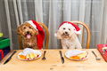 Concept of excited dogs on Santa hat having delicious raw meat C