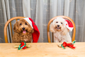 Concept of excited dogs on Santa hat with Christmas gift on tabl - PhotoDune Item for Sale