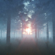 The Forest and Sun - VideoHive Item for Sale