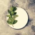 fresh mint - PhotoDune Item for Sale