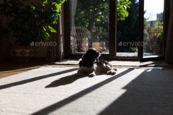Dog in the sun - Stock Photo - Images