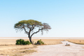 Tree with Etosha Pan in northern Namibia in the back - PhotoDune Item for Sale