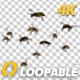 Wasp Swarm - Flying Around - 4K - VideoHive Item for Sale
