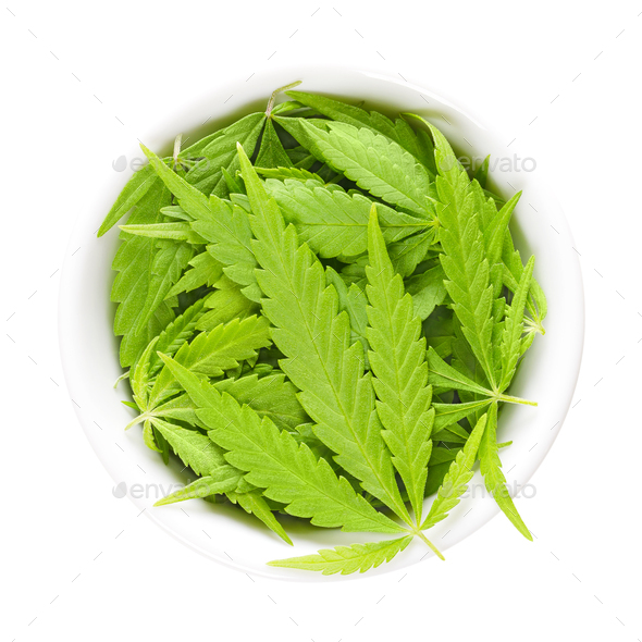 Cannabis leaves, hemp leaves, in white porcelain bowl - Stock Photo - Images