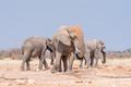 Three african elephants at the Rateldraf waterhole - PhotoDune Item for Sale