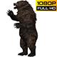 Bear 13