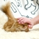Cute Ginger Cat Lies in Bed, Man Scratches It's Neck Funny Pet with Pleased Emotion on Face - VideoHive Item for Sale