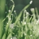 Green Grass and Drops of Morning Dew - VideoHive Item for Sale