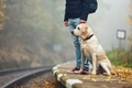 Man traveling with his dog by train - PhotoDune Item for Sale