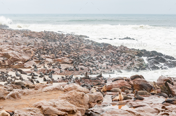 Seal colony at Cape Cross - Stock Photo - Images