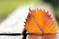Autumn leaf - PhotoDune Item for Sale