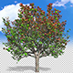 Growing Apple Tree - VideoHive Item for Sale