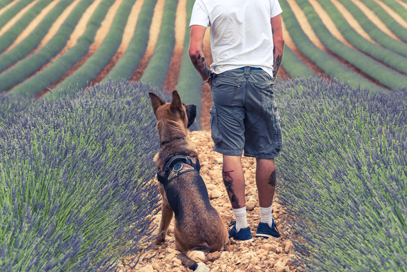 Couple travellers in lavender fields in Provence - Stock Photo - Images