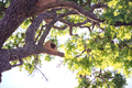 Rufous Hornero Nest - PhotoDune Item for Sale