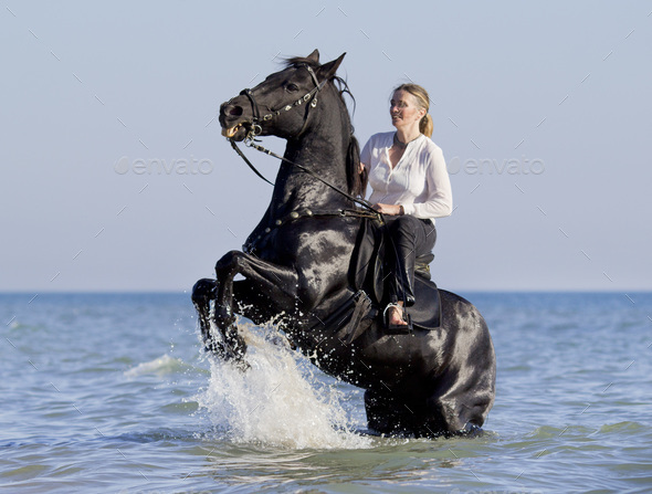 horsewoman in the sea - Stock Photo - Images
