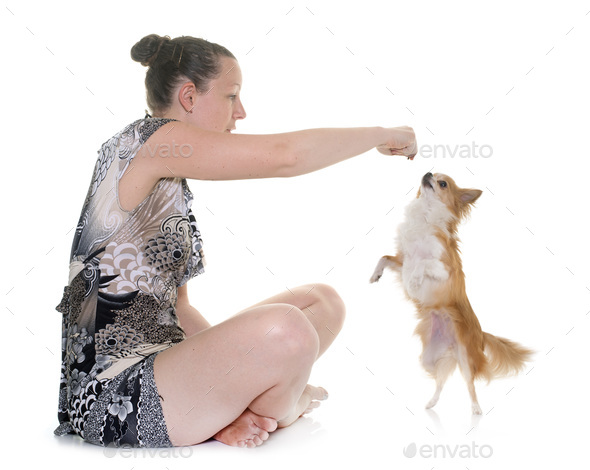 chihuahua and woman - Stock Photo - Images