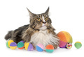 maine coon cat and toys - PhotoDune Item for Sale